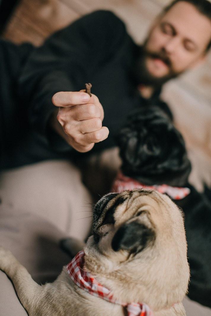 sesja fotograficzna z psami