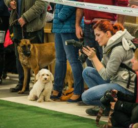 Alicja Duchiewicz na wystawie psów // fot. Kuba Potocki